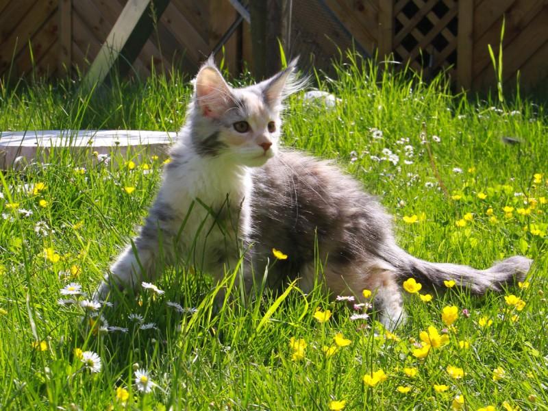 [ Kitten-Seite ]