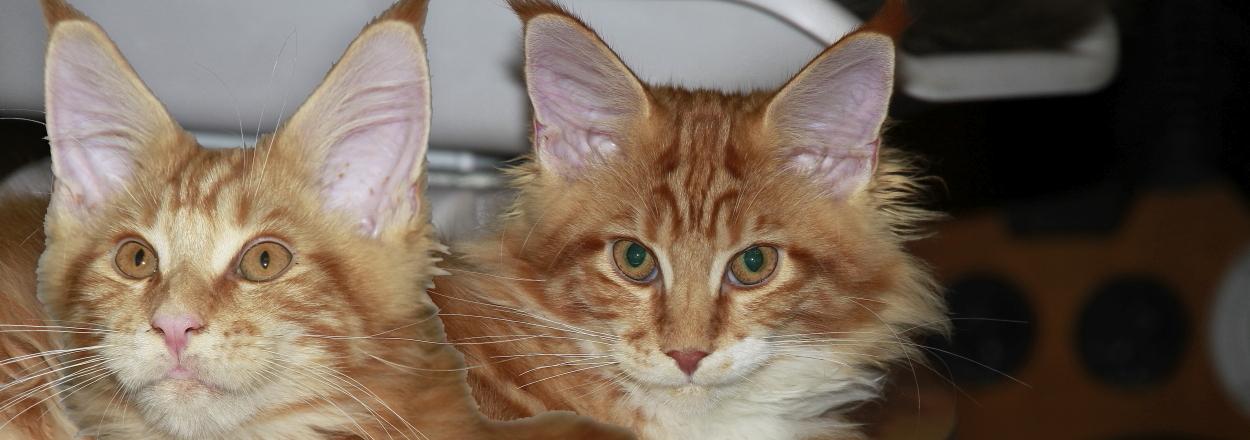 (D-Team) Goldie & Seymone